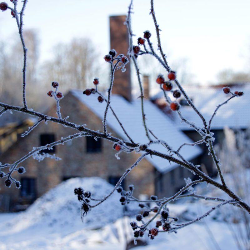 vinter_3
